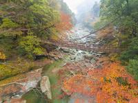 ドローンによる祖谷のかずら橋と紅葉 22451035441| 写真素材・ストックフォト・画像・イラスト素材|アマナイメージズ