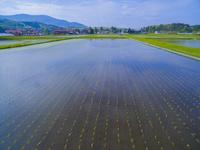 ドローンによる田植えの早苗と農村風景 22451035453| 写真素材・ストックフォト・画像・イラスト素材|アマナイメージズ