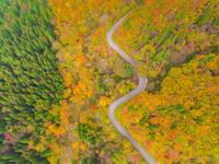ドローンによる秋の大山環状道路 22451035483| 写真素材・ストックフォト・画像・イラスト素材|アマナイメージズ