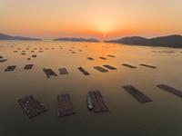 ドローンによる虫明湾の牡蠣筏と朝日 22451035500| 写真素材・ストックフォト・画像・イラスト素材|アマナイメージズ