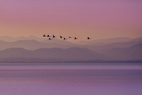 湖北風景 夕景