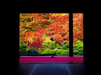 金剛輪寺 紅葉 22456002046| 写真素材・ストックフォト・画像・イラスト素材|アマナイメージズ