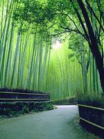 竹林 小径