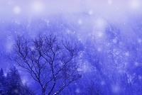 小入谷  冬