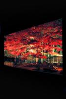 宝泉院 紅葉 夜景