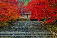 二尊院 紅葉 22456002191| 写真素材・ストックフォト・画像・イラスト素材|アマナイメージズ