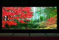 宝泉院 紅葉 22456002209| 写真素材・ストックフォト・画像・イラスト素材|アマナイメージズ
