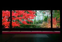 宝泉院 紅葉 22456002210| 写真素材・ストックフォト・画像・イラスト素材|アマナイメージズ