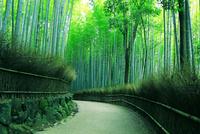 嵯峨野 竹林の道 22456002320| 写真素材・ストックフォト・画像・イラスト素材|アマナイメージズ