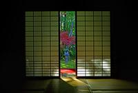 高桐院 紅葉 22456002340| 写真素材・ストックフォト・画像・イラスト素材|アマナイメージズ