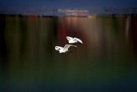 白鷲 22456002444| 写真素材・ストックフォト・画像・イラスト素材|アマナイメージズ