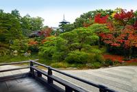 仁和寺 紅葉 22456002466| 写真素材・ストックフォト・画像・イラスト素材|アマナイメージズ