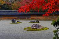 龍安寺 紅葉 22456002505| 写真素材・ストックフォト・画像・イラスト素材|アマナイメージズ