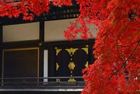 仁和寺 紅葉 22456002567| 写真素材・ストックフォト・画像・イラスト素材|アマナイメージズ