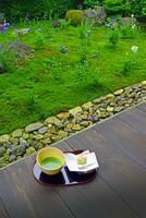 京都府 天得院 抹茶 和菓子 22456002792| 写真素材・ストックフォト・画像・イラスト素材|アマナイメージズ