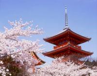 春の清水寺 三重の塔