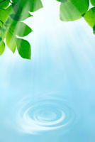 青い水の波紋と新緑 22481000971| 写真素材・ストックフォト・画像・イラスト素材|アマナイメージズ
