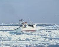 流氷とスケソウ船