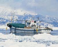 スケソウ船と流氷