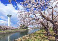 五稜郭タワーと桜 22502004469| 写真素材・ストックフォト・画像・イラスト素材|アマナイメージズ