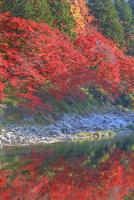 秋の香嵐渓 22502005096| 写真素材・ストックフォト・画像・イラスト素材|アマナイメージズ