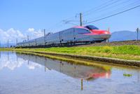 水田と秋田新幹線 22502009343  写真素材・ストックフォト・画像・イラスト素材 アマナイメージズ