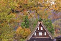 五箇山の菅沼集落 22502010373| 写真素材・ストックフォト・画像・イラスト素材|アマナイメージズ