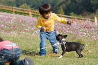 お花畑で犬と遊ぶ少年