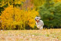紅葉の中の犬