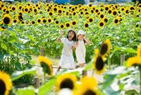 向日葵畑で遊ぶ2人の女の子