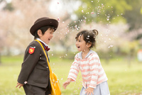 桜の公園で幼稚園の制服を着た子ども