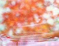 波紋と紅葉 合成 22547000784| 写真素材・ストックフォト・画像・イラスト素材|アマナイメージズ