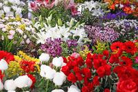 花  リオ・デ・ジャネイロの市場にて  ブラジル