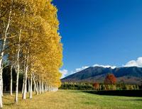 岩手山と白樺林