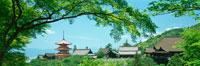 清水寺と新緑