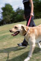 犬と散歩 22600003241| 写真素材・ストックフォト・画像・イラスト素材|アマナイメージズ