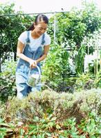 家庭菜園 22600004668  写真素材・ストックフォト・画像・イラスト素材 アマナイメージズ