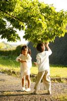 公園の新芽を摘む兄妹 22600005034| 写真素材・ストックフォト・画像・イラスト素材|アマナイメージズ