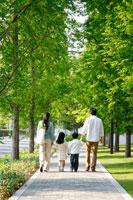 新緑の歩道を歩く30代家族4人 後姿