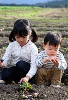 畑の土に触れる子供2人