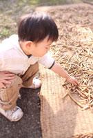 干した作物を興味深く触る男の子 22600005857| 写真素材・ストックフォト・画像・イラスト素材|アマナイメージズ