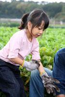 畑で収穫を手伝う女の子
