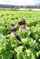 畑で収穫する子供2人