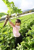 収穫した大根を持ち上げる女の子