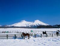 牧場と駒ケ岳