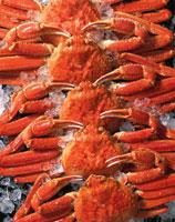 ずわい蟹と氷