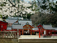 霧島神宮と桜