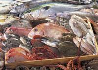 魚貝類の集合