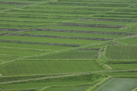 クヌギ平の棚田 22717002155| 写真素材・ストックフォト・画像・イラスト素材|アマナイメージズ