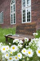 庭のベンチと花